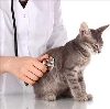 Ветеринарные клиники в Рыльске